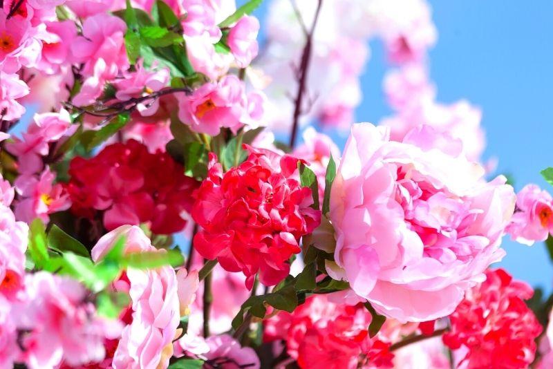 rose garden at Parc de Bagatelle