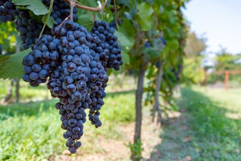 Weintour Mykonos