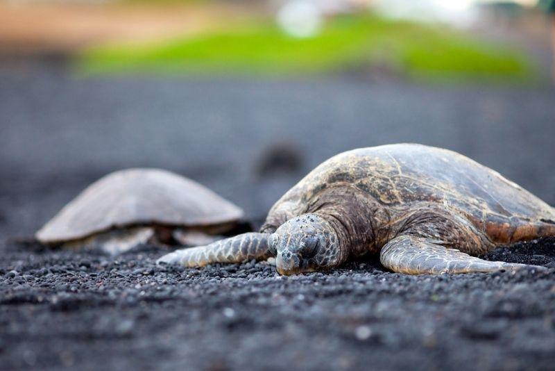 Black Sand Beach, Big Island, Hawaii