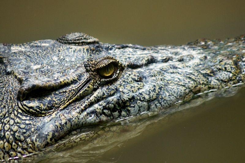 Crocodile Lake National Wildlife Refuge, Key Largo