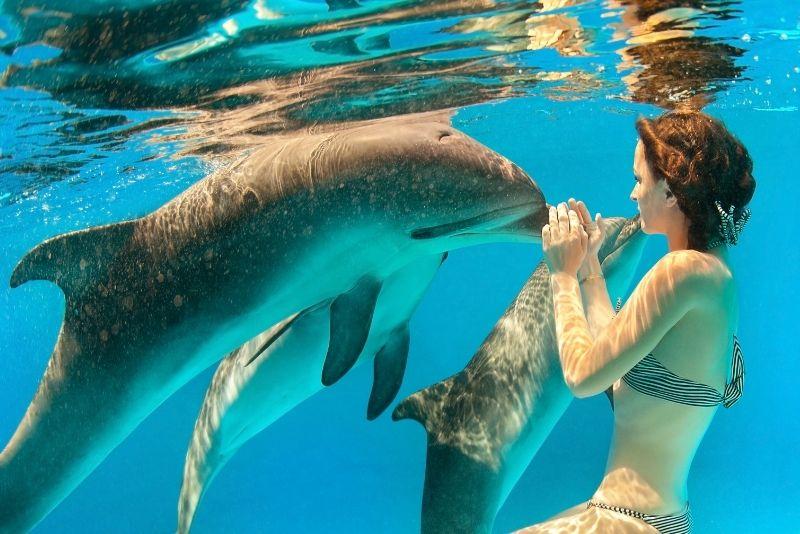Dolphins Plus Bayside, Key Largo