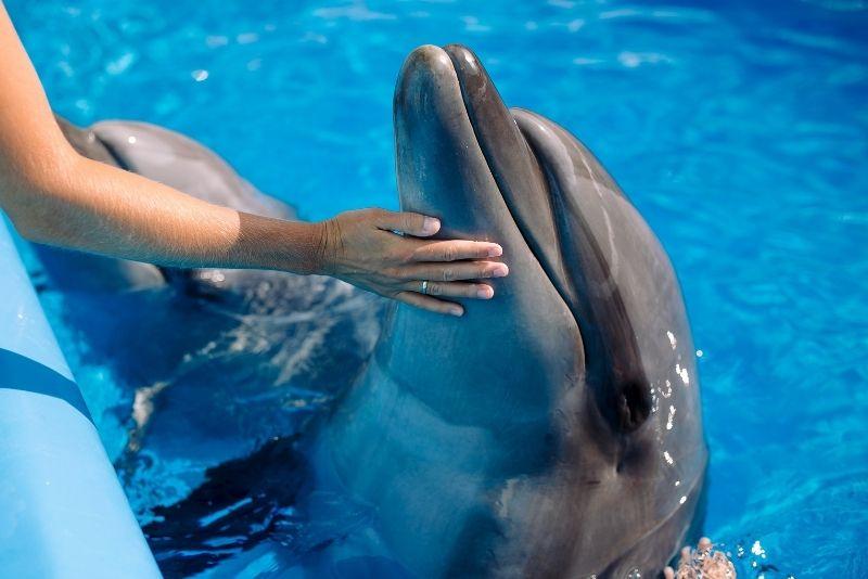 Dolphins Plus Marine Mammal Responder, Key Largo