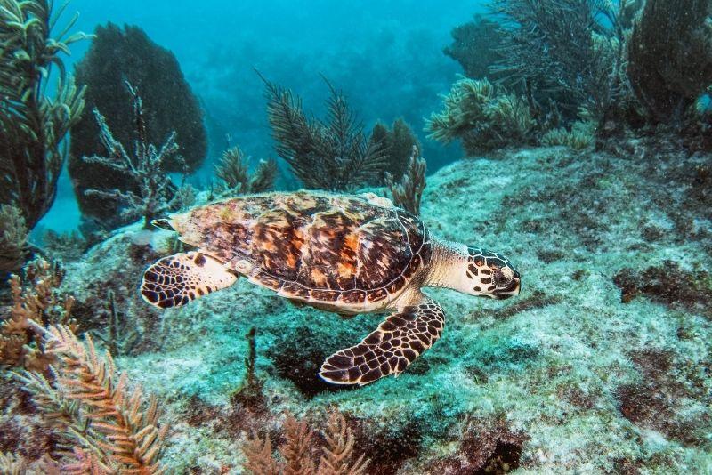 Florida Keys National Marine Sanctuary, Key Largo