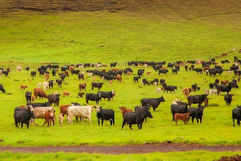 Kahua Ranch, Big Island, Hawaii