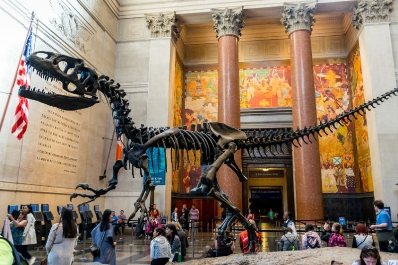 Museum of Natural History, New York