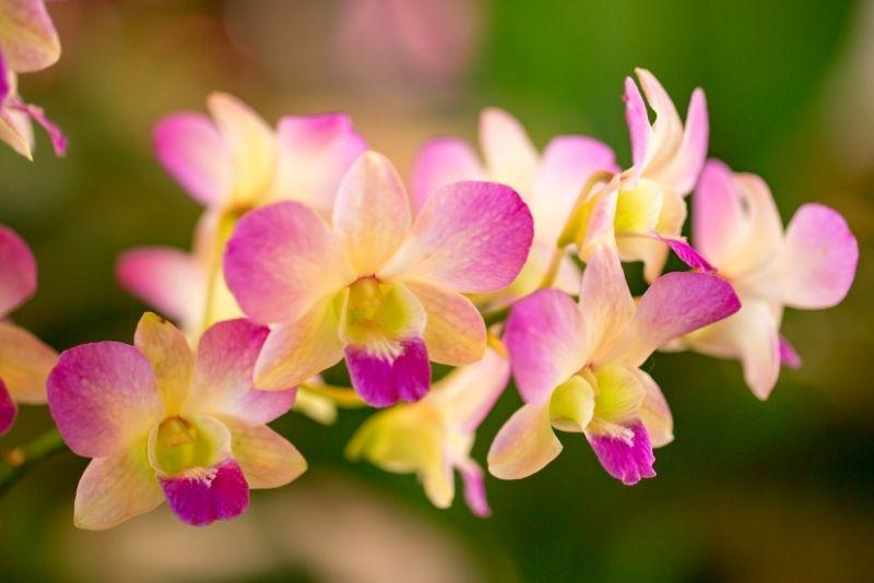 National Tropical Botanical Garden, Kauai