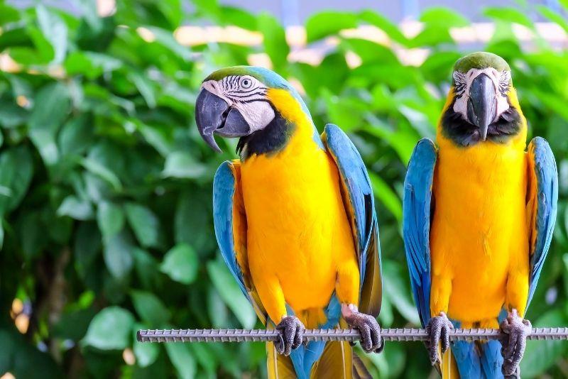 Panaewa Rainforest Zoo and Gardens, Big Island