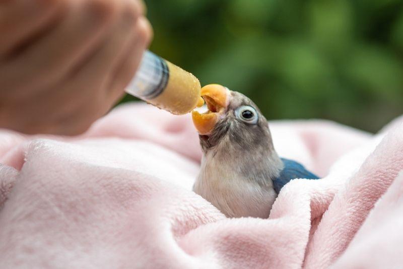 Wild Bird Rehabilitation Center, Key Largo
