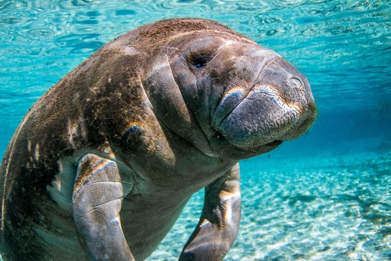 dolphin and manatee tours in Key Largo