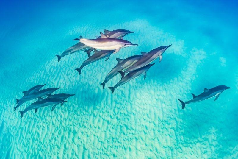 dolphin watching in Kauai
