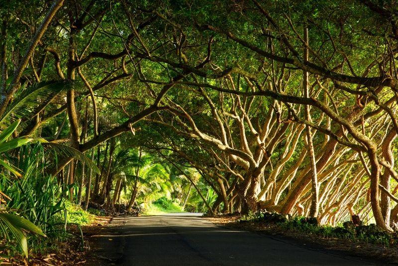 road trip on the Big Island, Hawaii