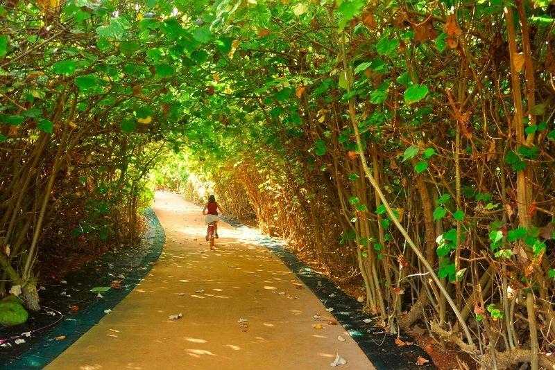 tree tunnel bike tour on the Big Island