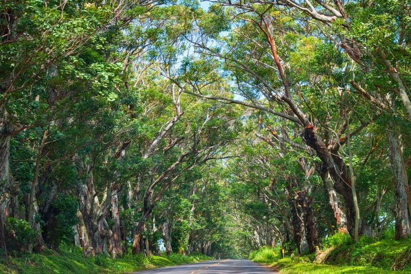 Maliuhi Road, Kauai, Hawaii