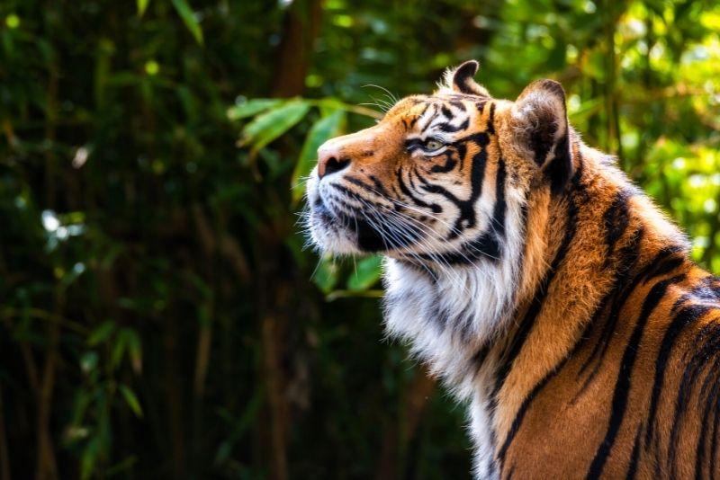 National Zoological Park, Washington DC