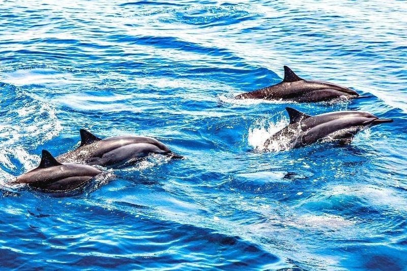 dolphin watching in Clearwater