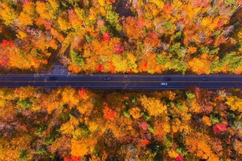 fall foliage tour in Boston