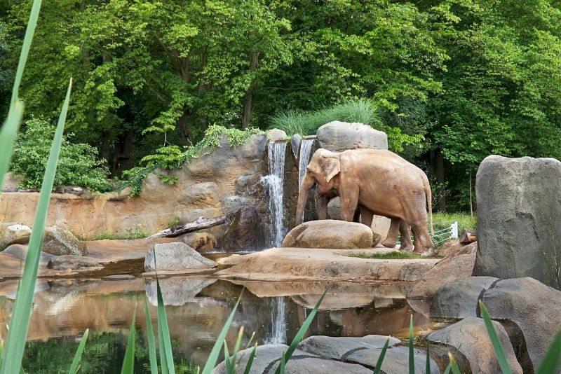 zoológico en praga