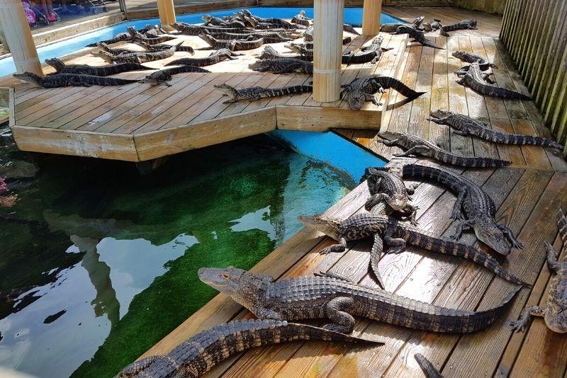 Alligator Adventure, Myrtle Beach