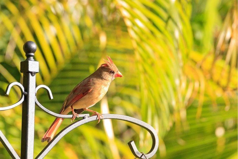 Bird Gardens of Naples, Florida