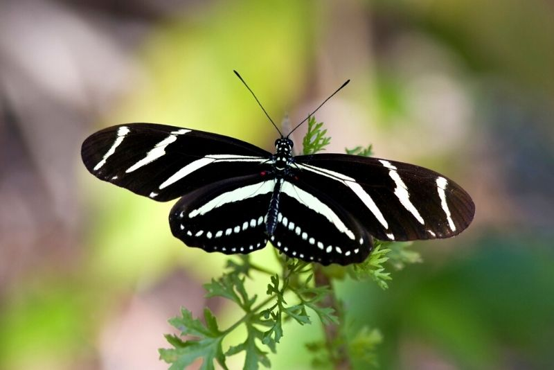 Butterfly Estates, Fort Myers