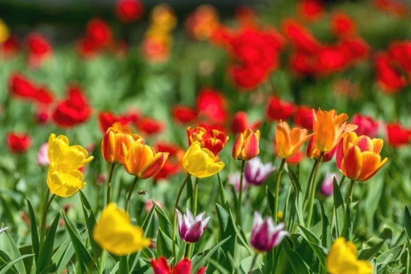 Dallas Arboretum & Botanical Gardens, Texas