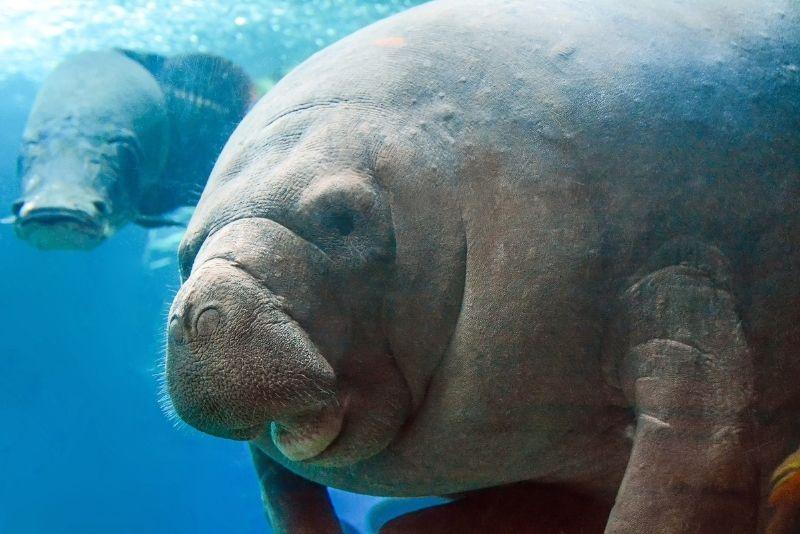 Dallas World Aquarium, Texas