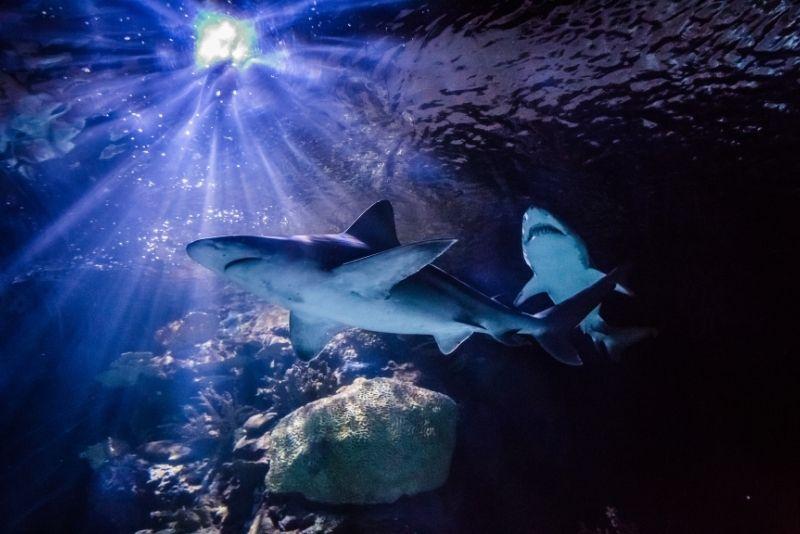 Downtown Aquarium in Houston