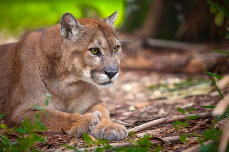 Florida Panther National Wildlife Refuge, Naples