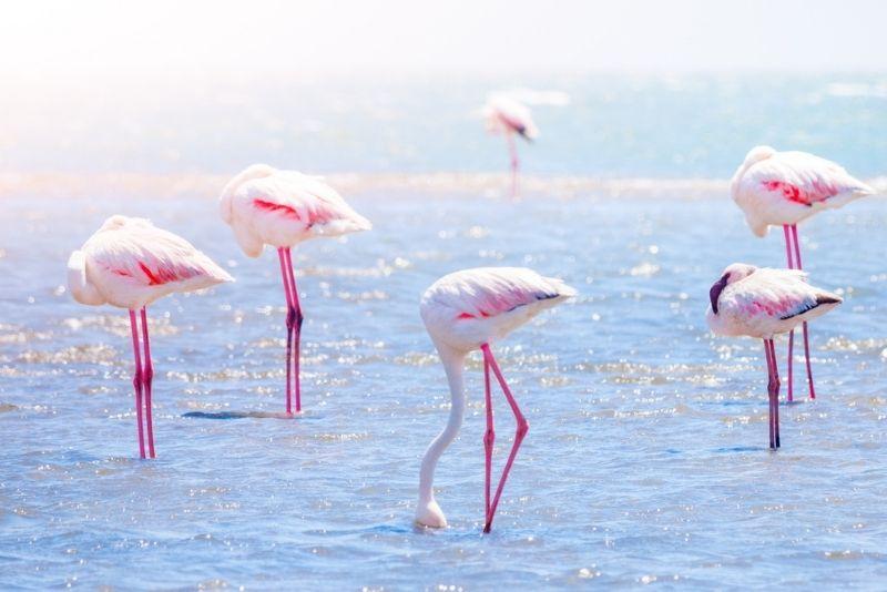 J.N. Ding Darling National Wildlife Refuge, Fort Myers