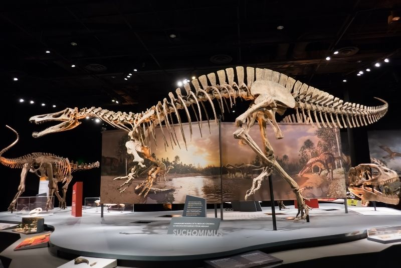 Perot Museum of Nature and Science, Dallas