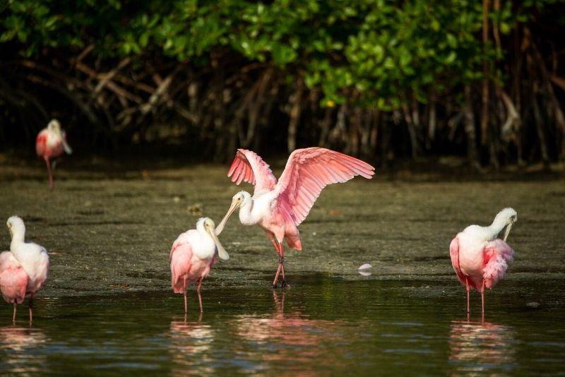Rookery Bay Reserve, Naples, Florida
