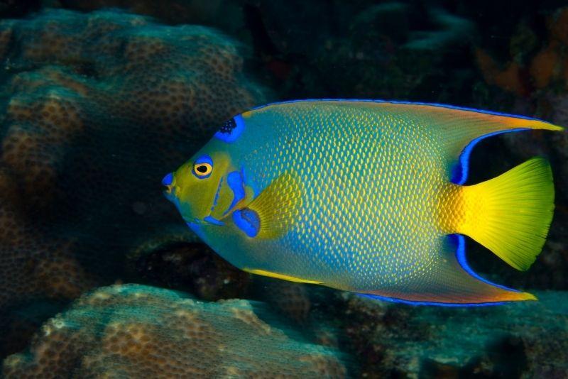 St Augustine Aquarium, St Augustine