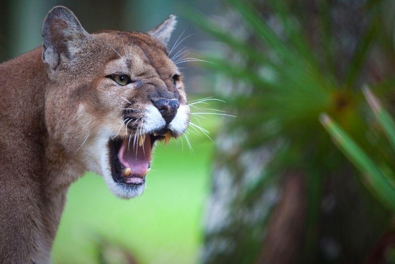 St. Augustine Wild Reserve, Florida