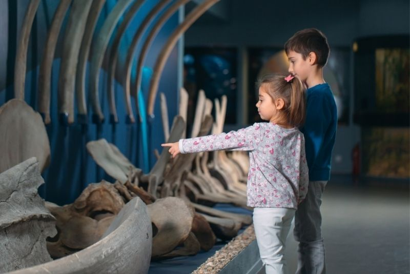 Museo delle balene d'Islanda, Islanda