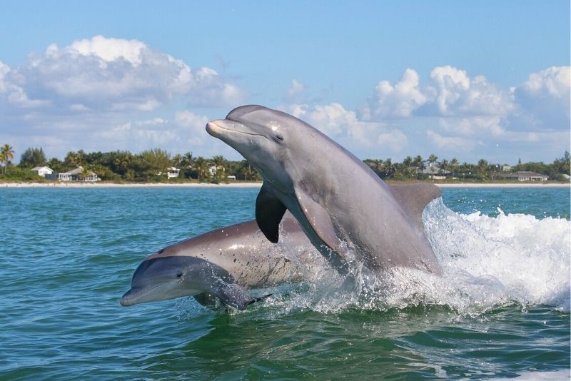 dolphin watching in Naples, Florida