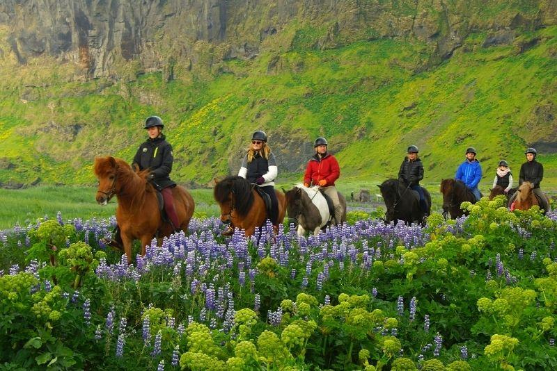 Reittouren in Island
