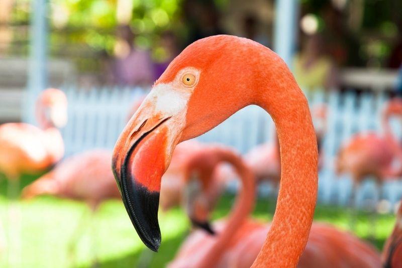 Ardastra Gardens in Nassau, The Bahamas