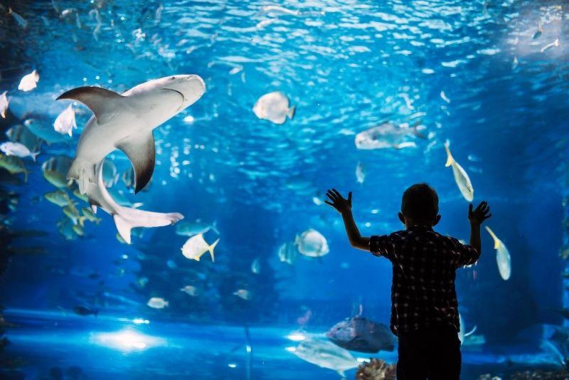 Austin Aquarium, Texas