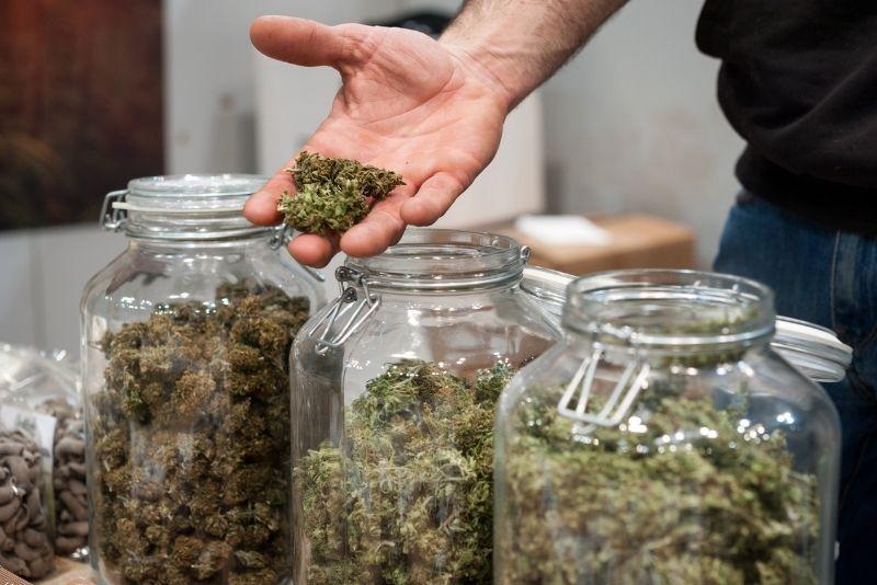 Cannabis tour in Denver