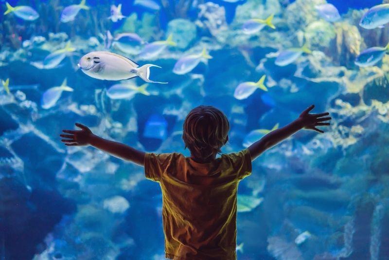 Downtown Aquarium, Denver