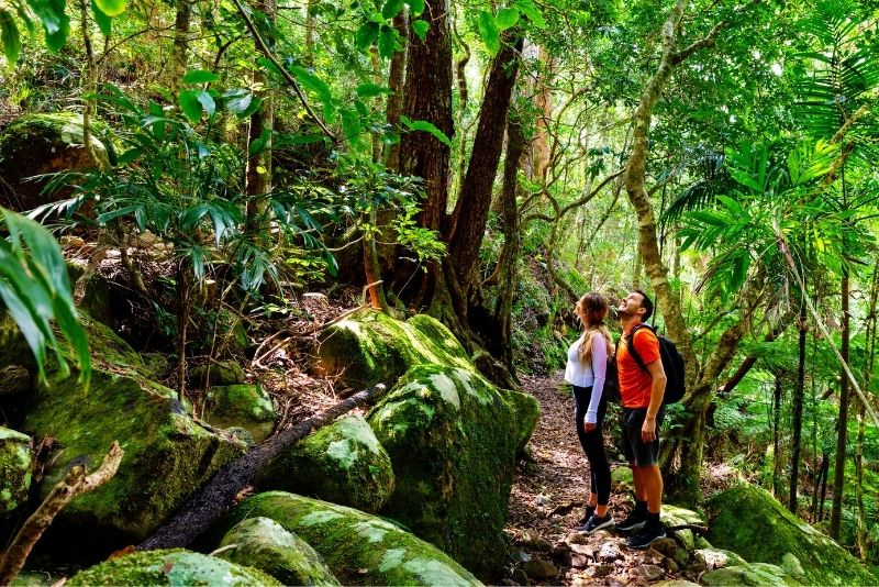 Edmund Forest Reserve, St Lucia