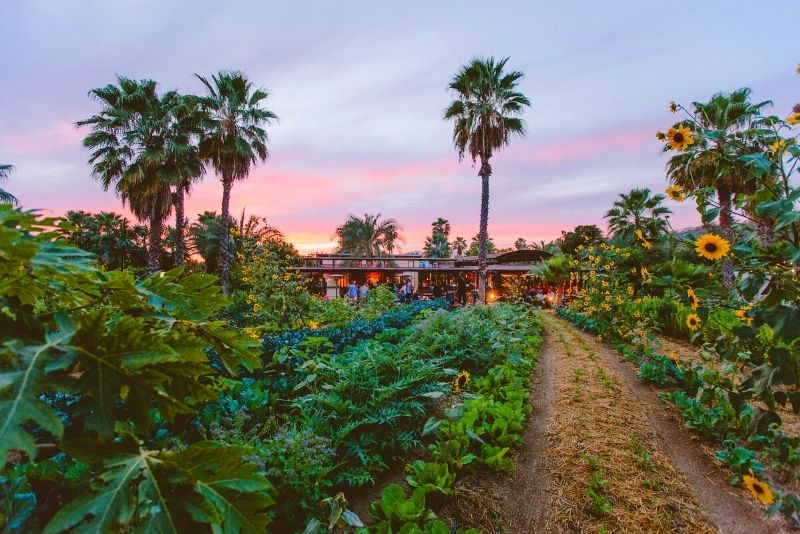 Flora Farms, Cabo San Lucas
