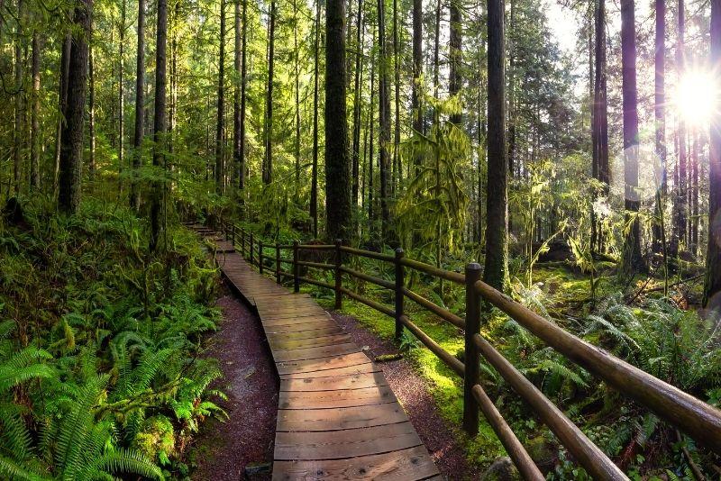 Lynn Canyon Park, Vancouver
