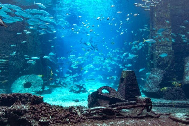 Marine Habitat, Paradise Island, The Bahamas
