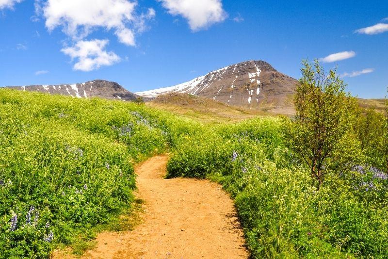 Escursione al Monte Esja, Reykjavik