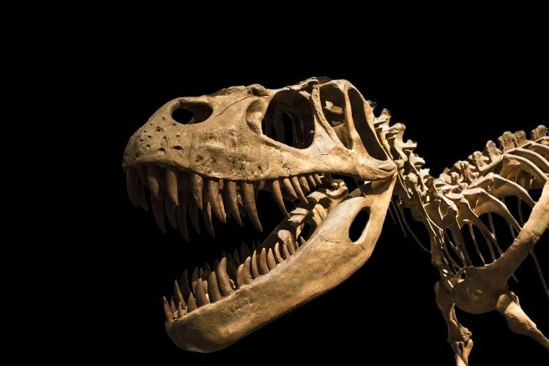 Ogden's George S. Eccles Dinosaur Park, Utah