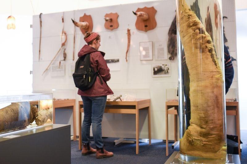 Museo Fallologico, Reykjavík