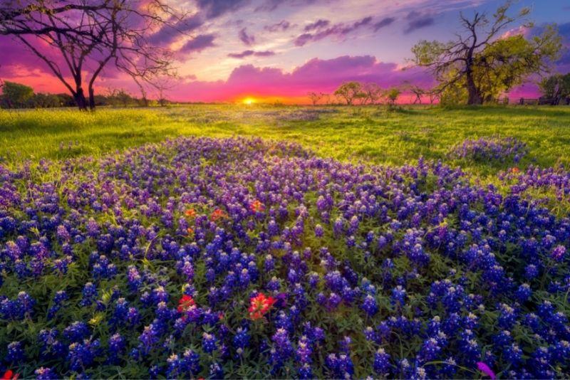 Texas Hill Country, Austin