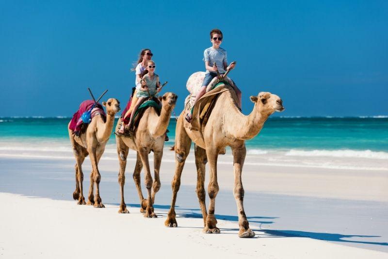 camel riding in Cabo San Lucas