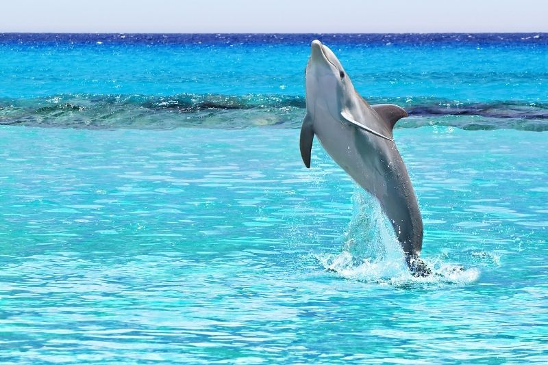 dolphin watching in Cabo San Lucas
